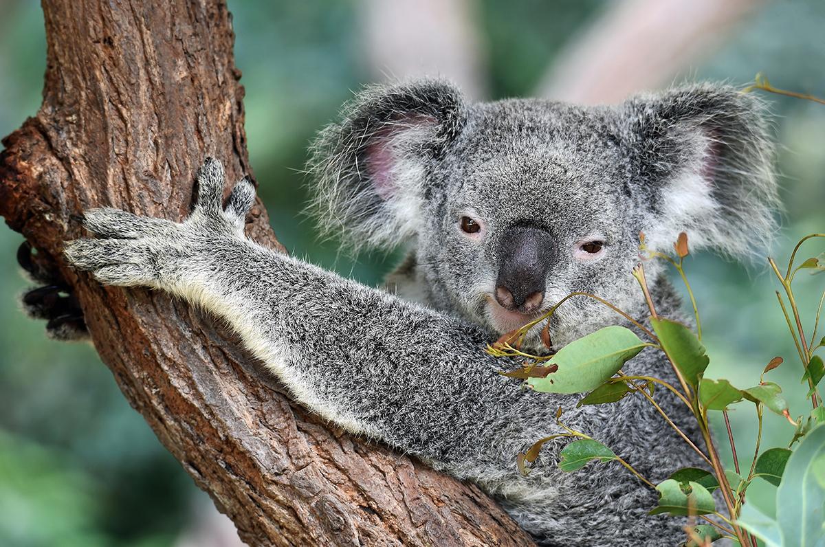 移民澳洲 澳洲留學 澳洲打工度假